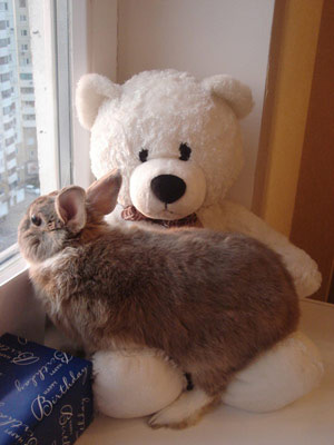 Для некоторых, декоративные кролики становятся лучшими игрушками, но не надо забывать, что они живые