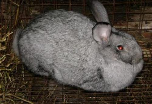 Кролик на отдыхе, - Сейчас по расписанию отдых, кто-то хочет мне помешать?!