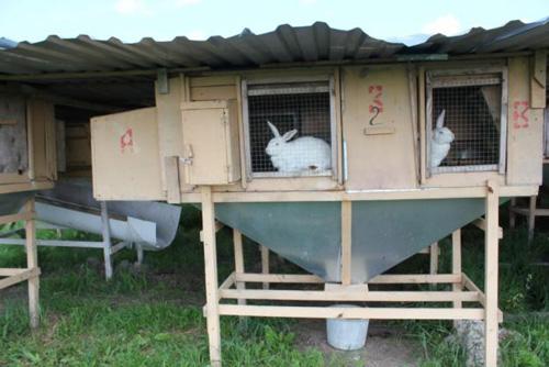 Кроликам очень уютно жить в клетках Михайлова