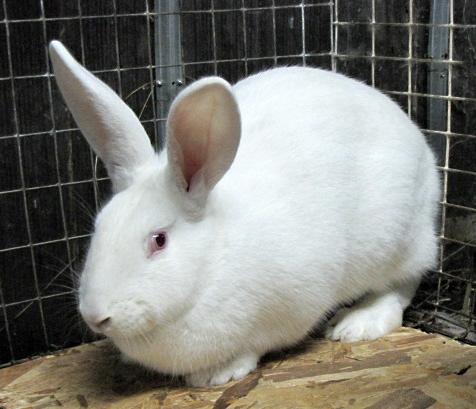 Кролик явно что-то подозревает